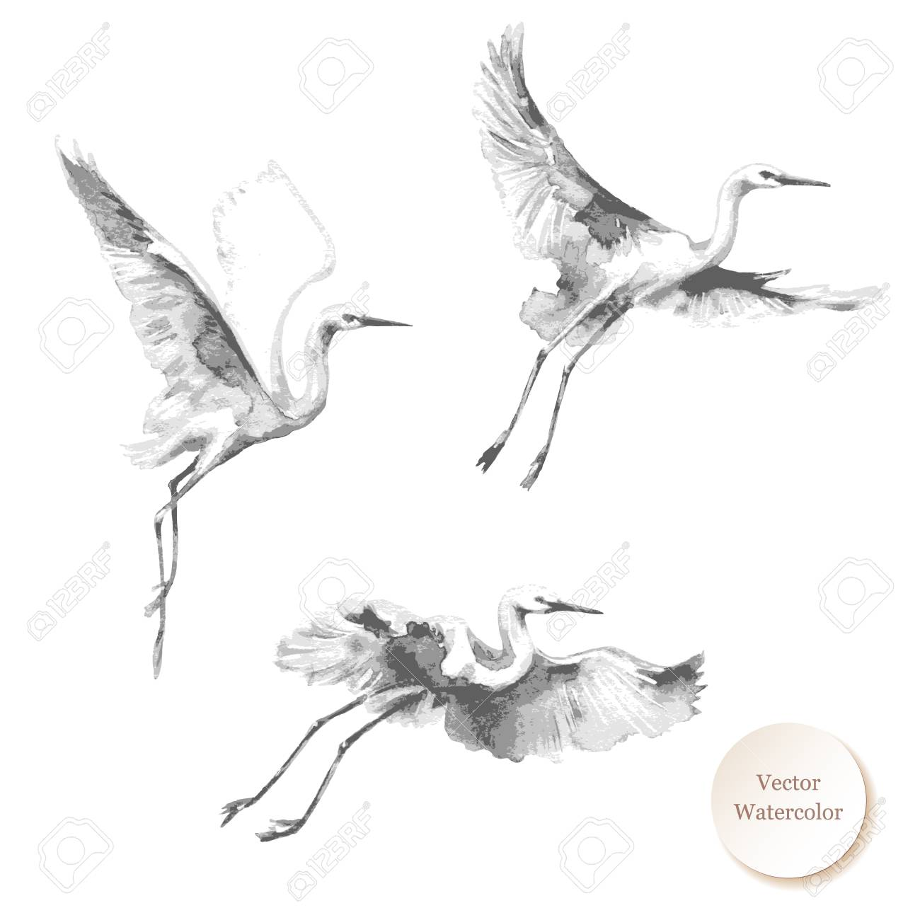 Watercolor painting. Hand drawn illustration. Flying storks isolated on white background. Bird flight monochrome vector sketch. - 93279164