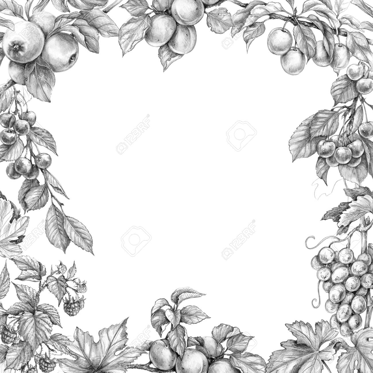 Hand drawn branches of fruit trees and bushes monochrome border made with sketch of fruits