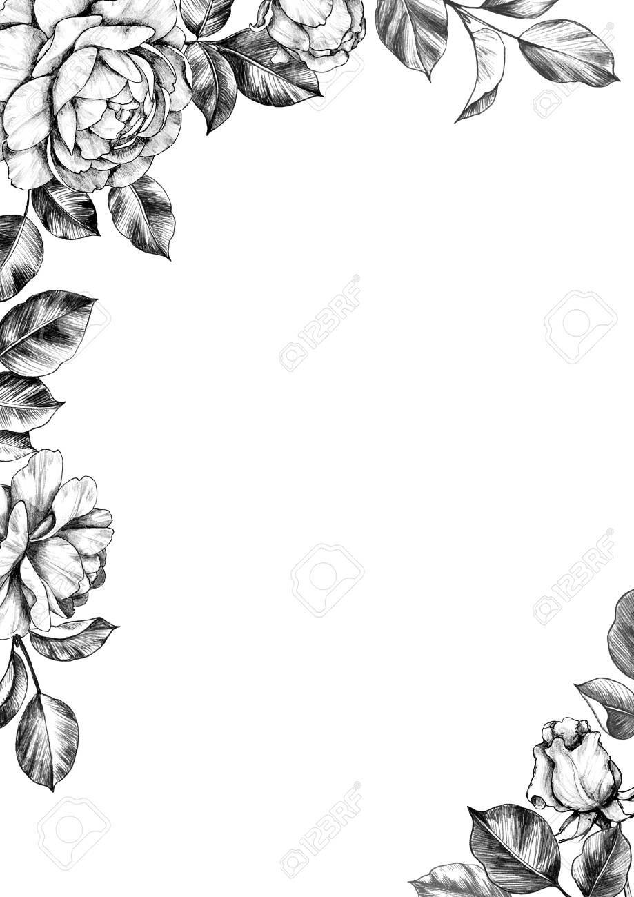 Black And White Elegant Border With Hand Drawn Rose Flower Buds