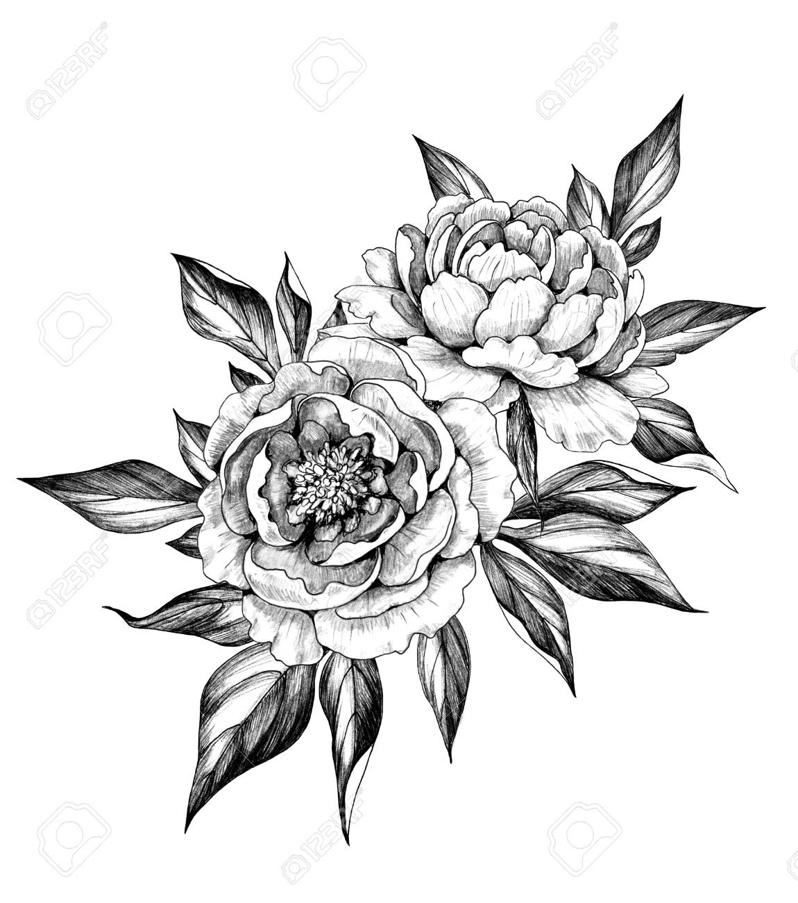Hand drawn floral bunch with two peony flowers and leaves isolated