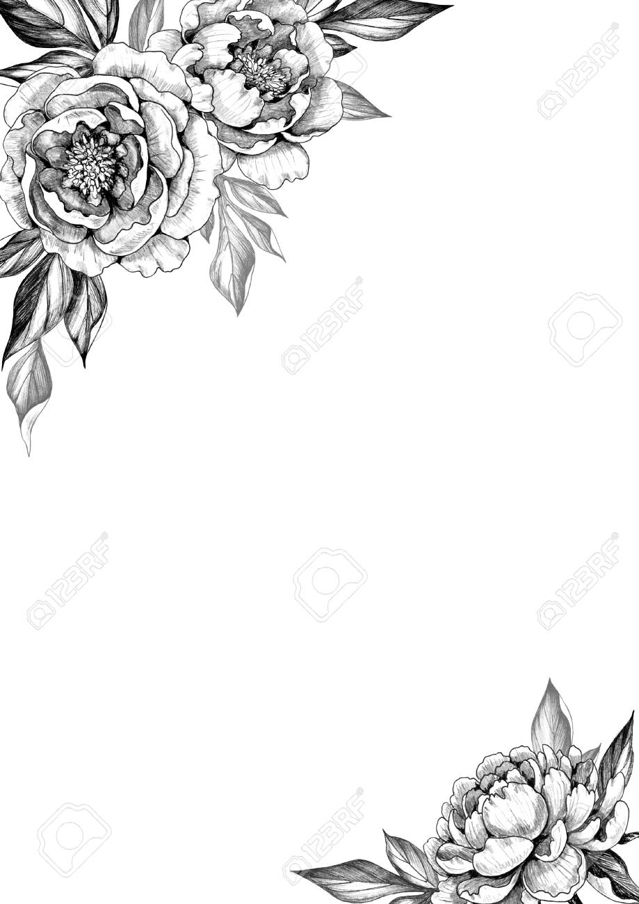 Black and white elegant background with peony flowers and leaves