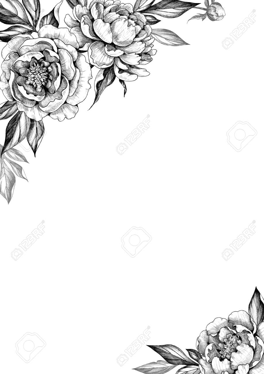 Black and white elegant background with peony flowers hand drawn