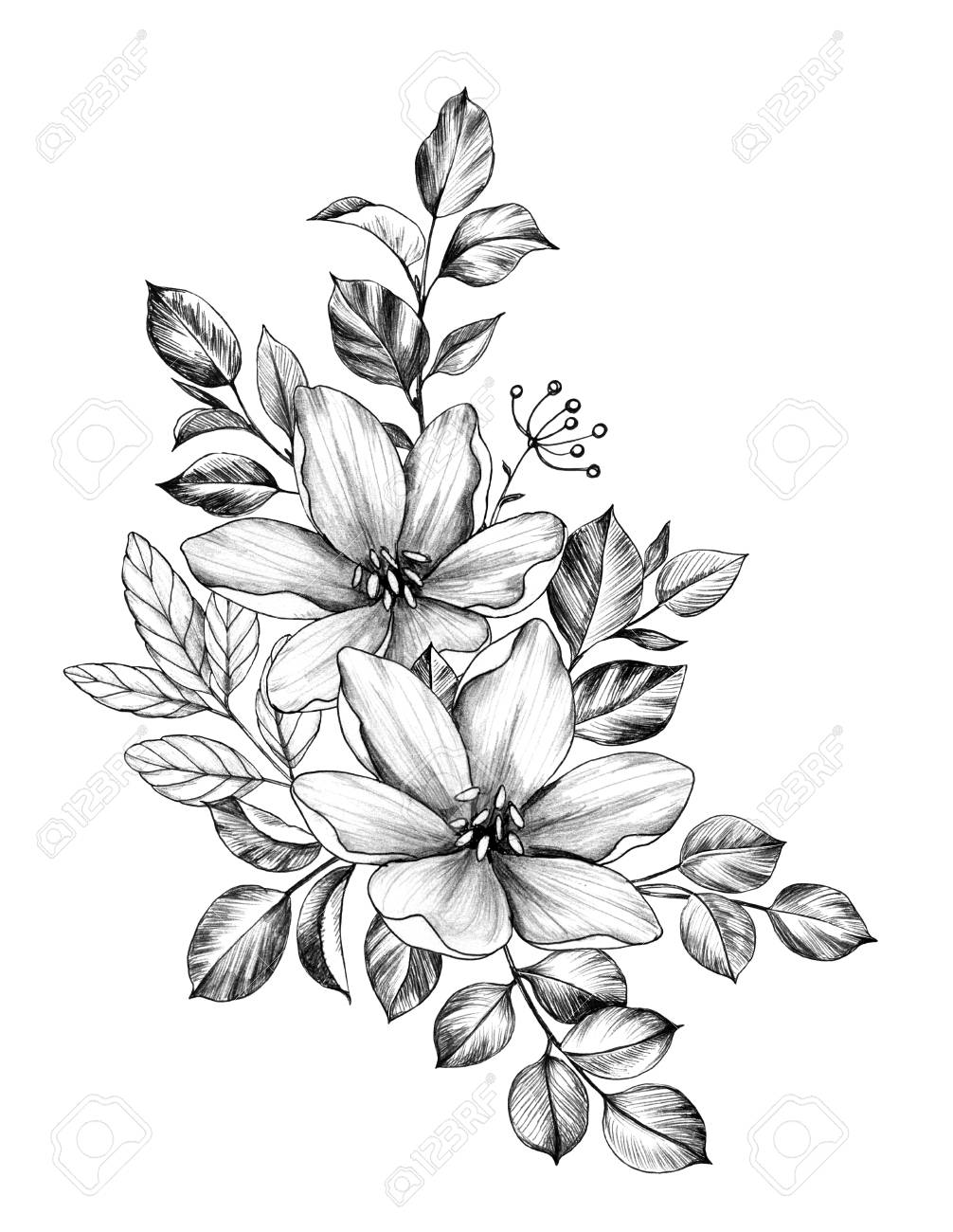 Sketches Of Flowers And Leaves In Pencil Chelss Chapman