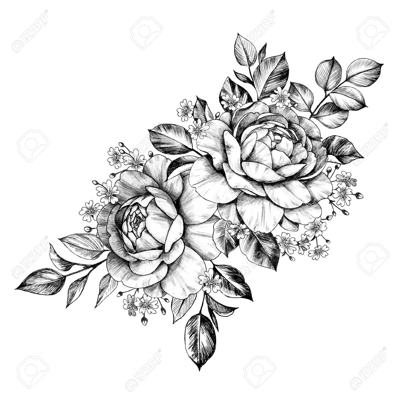 Hand drawn bunch with rose flowers and small gypsophila isolated