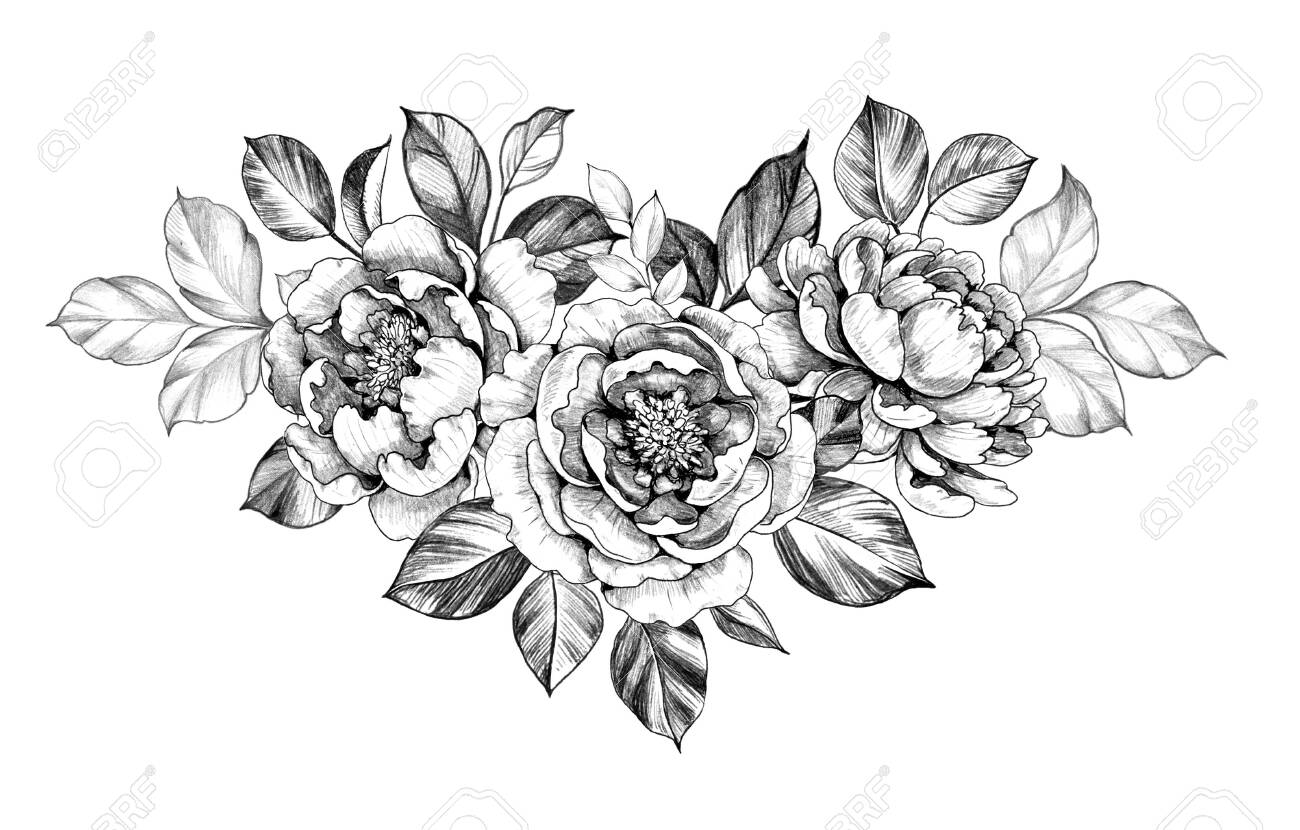Hand drawn peony flower and leaves isolated on white background