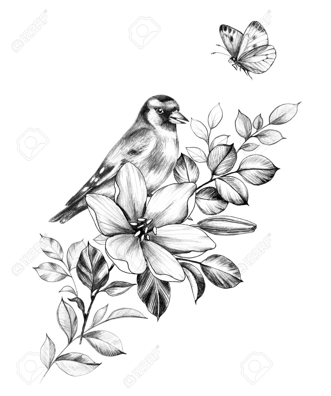 Hand drawn goldfinch sitting on branch with flower isolated on