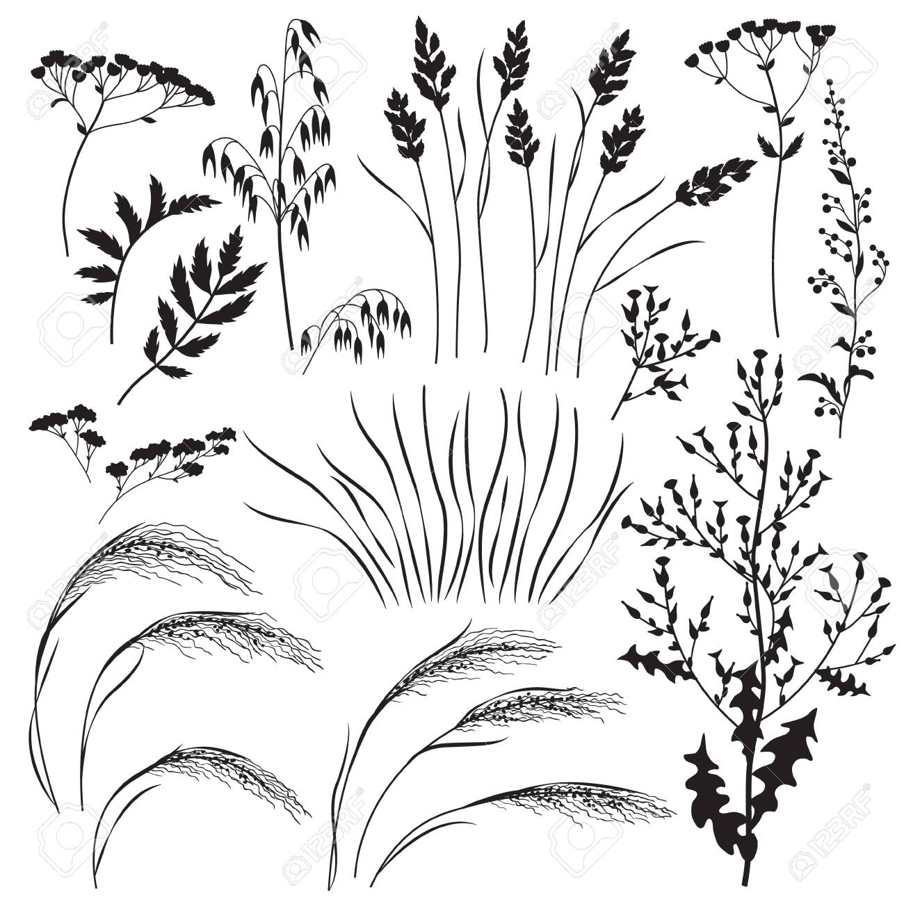 Silhouette set of wild grasses, herbs and cereals isolated on..