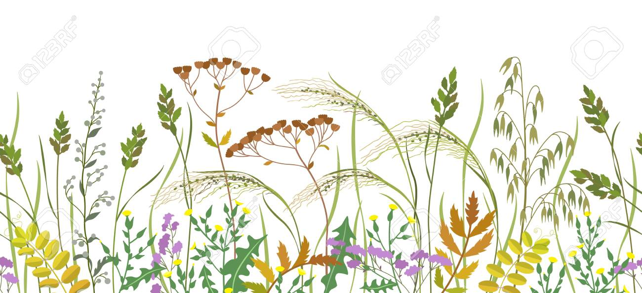 Seamless horizontal border made with wild plants. Meadow grass and wildflowers in row on white background. Floral natural pattern vector flat illustration. - 130546367