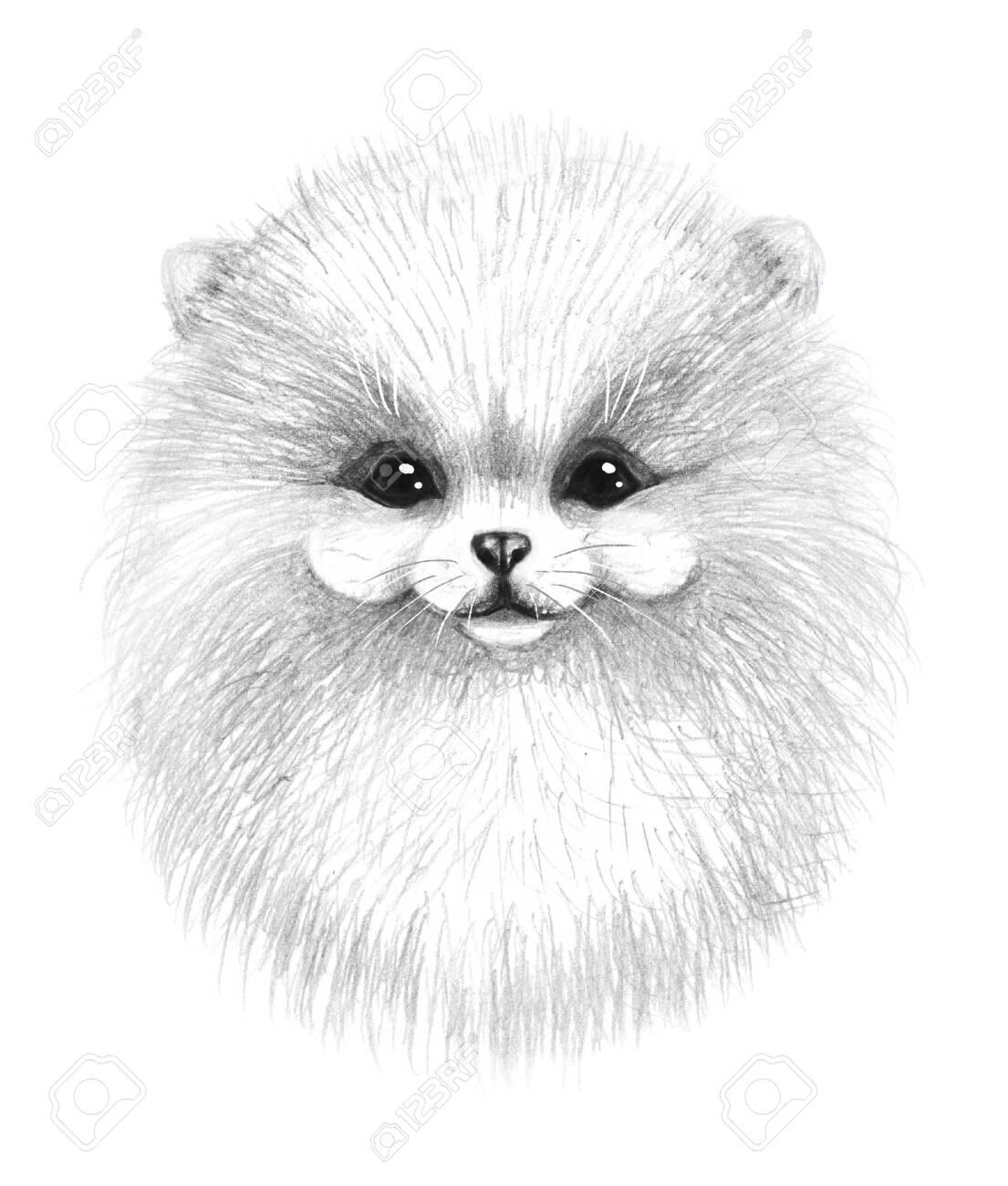Hand Drawn Monochrome Pomeranian Dog Isolated On White Background ...