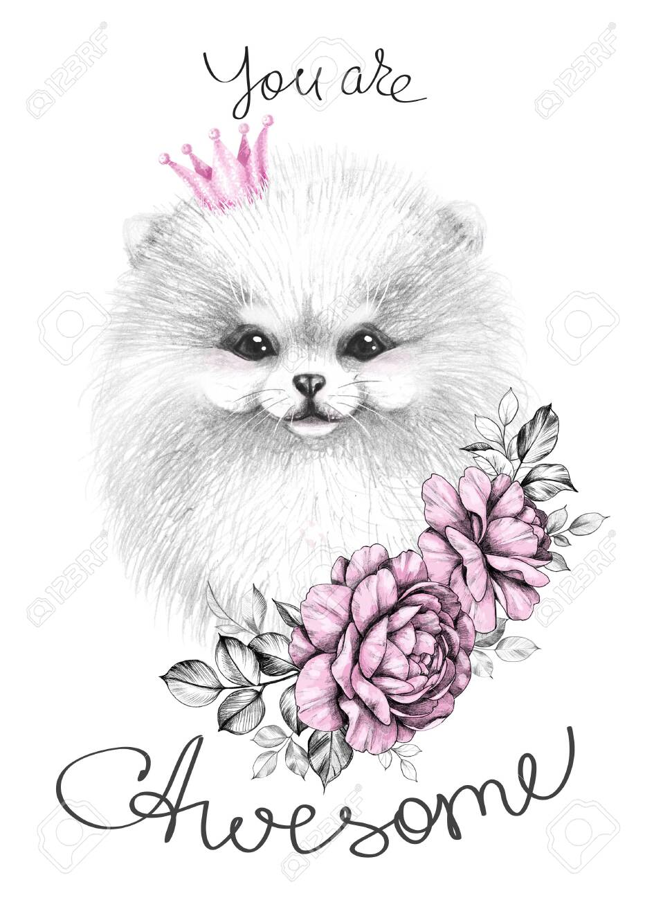 Hand Drawn Pomeranian With Pink Crown And Roses Pencil Drawing Stock Photo Picture And Royalty Free Image Image 134822463