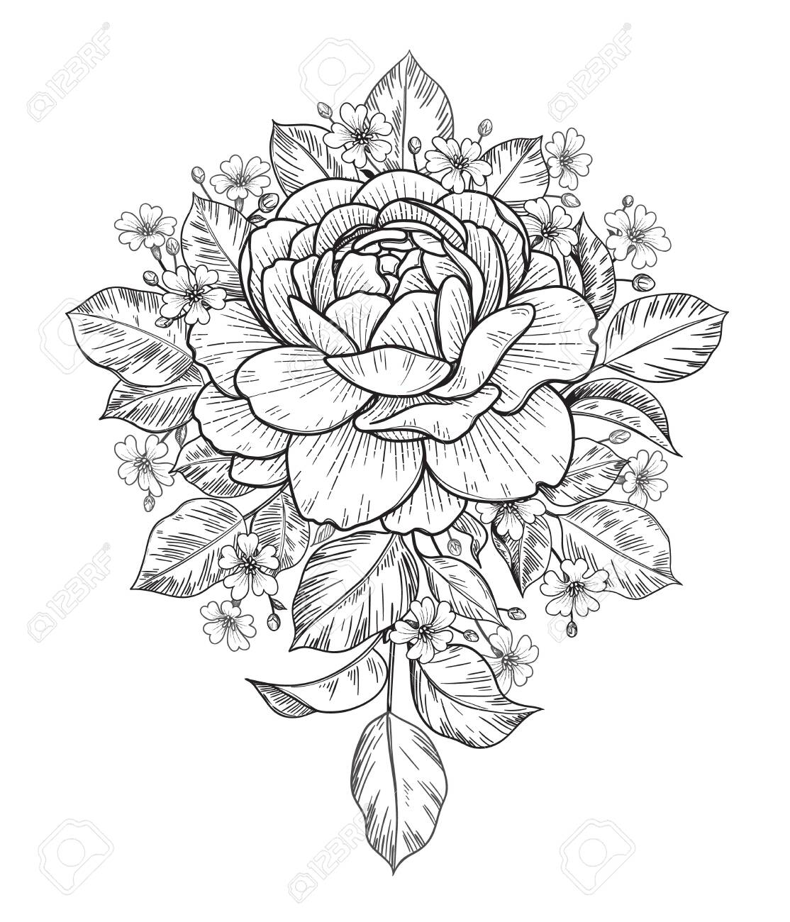 Hand drawn rose and small gypsophila flowers bunch isolated on white. Vector monochrome elegant floral composition in vintage style, t-shirt, tattoo design, coloring page, wedding decoration. - 147801495