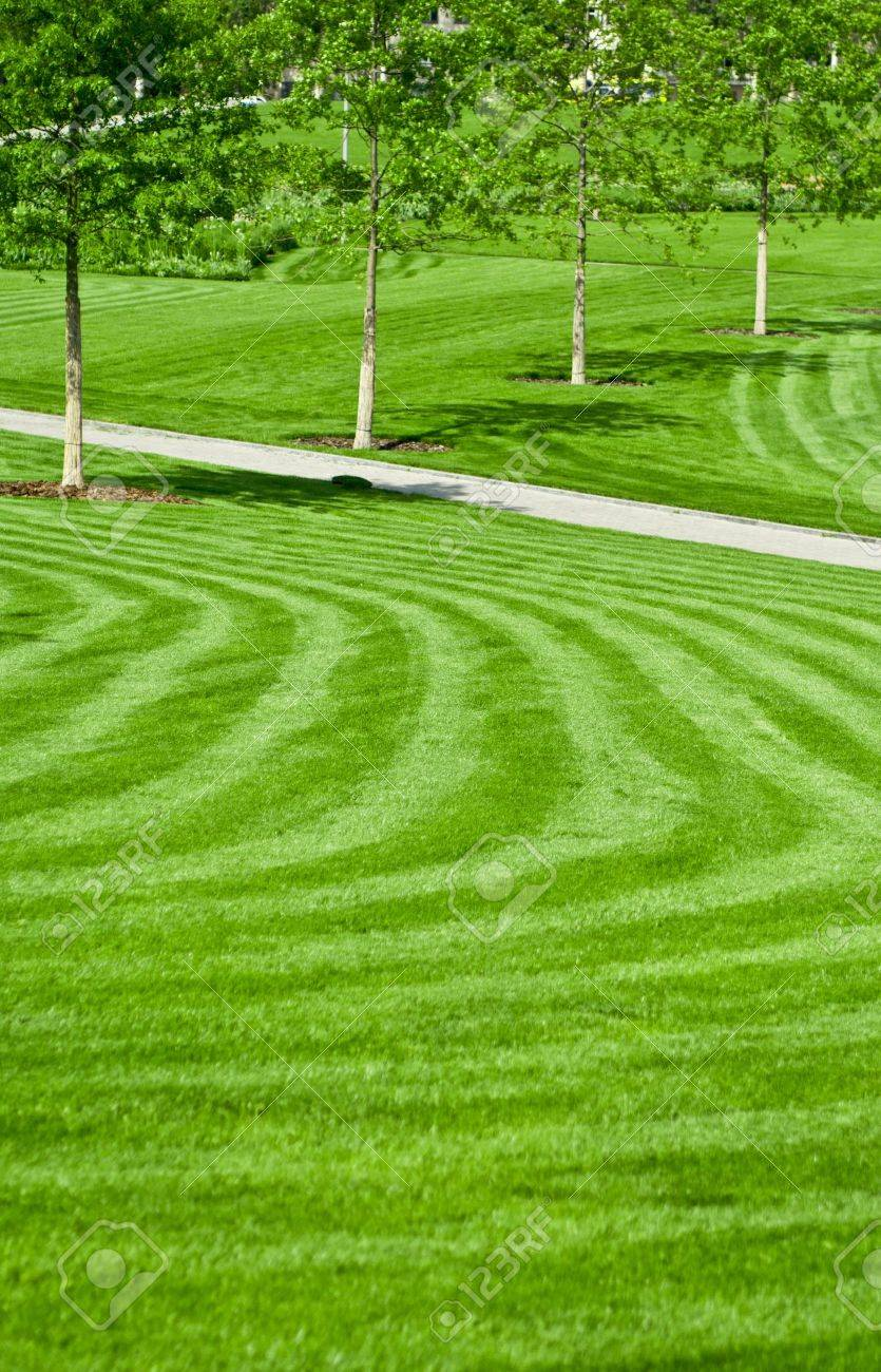 huge green lawn Stock Photo - 9568126