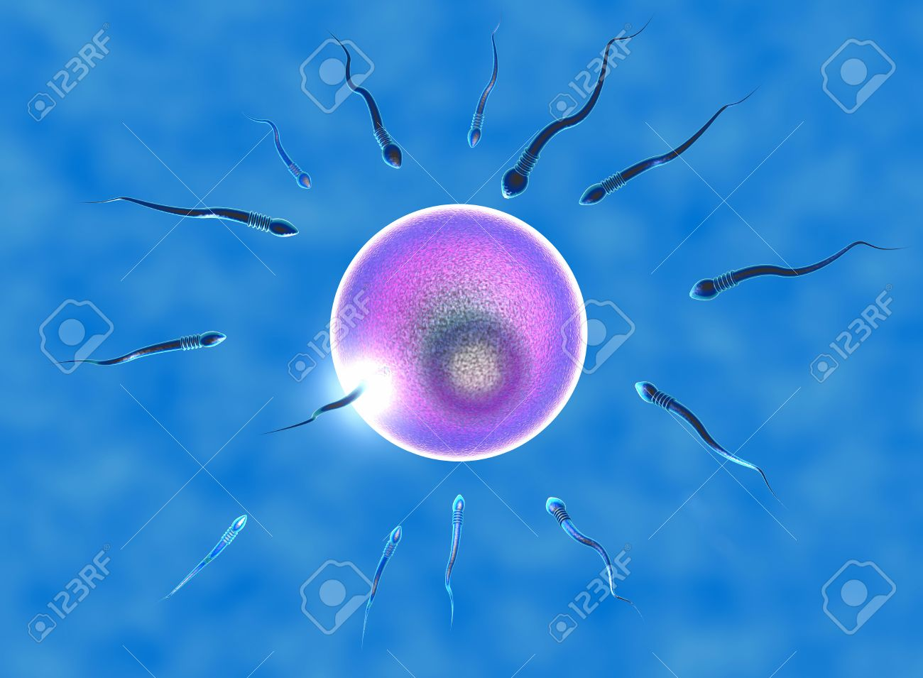 spermatozoyd-pod-mikroskopom