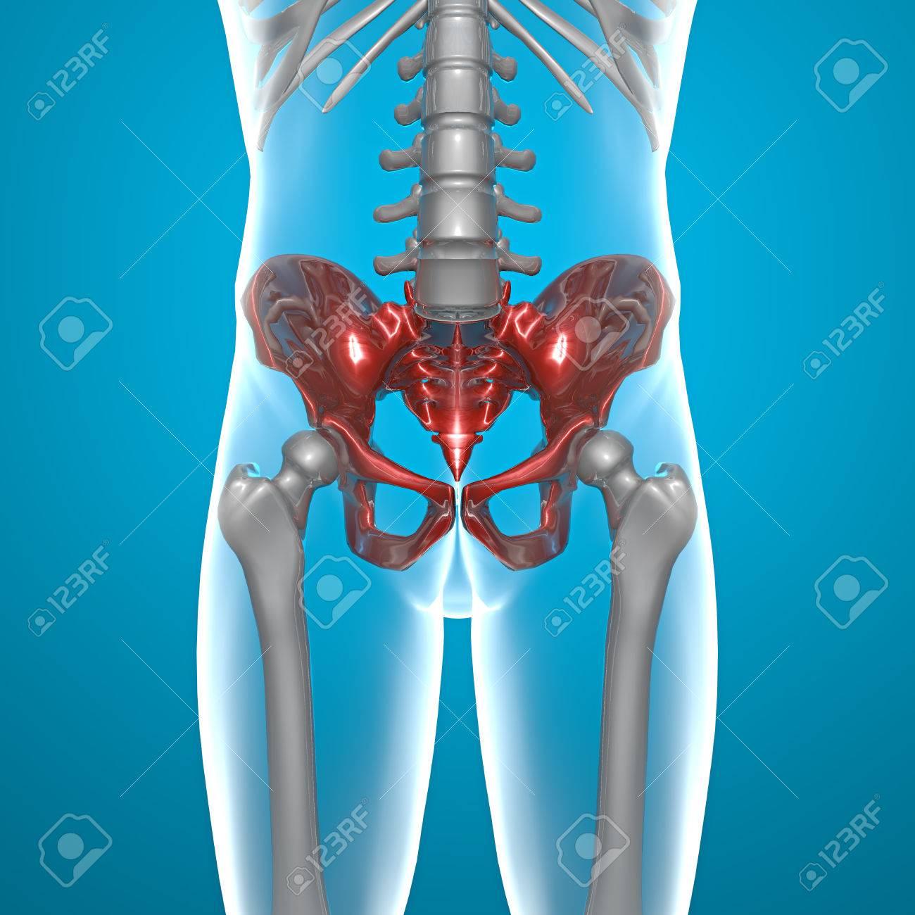 Becken Becken Menschlichen Körper X-ray Lizenzfreie Fotos, Bilder ...