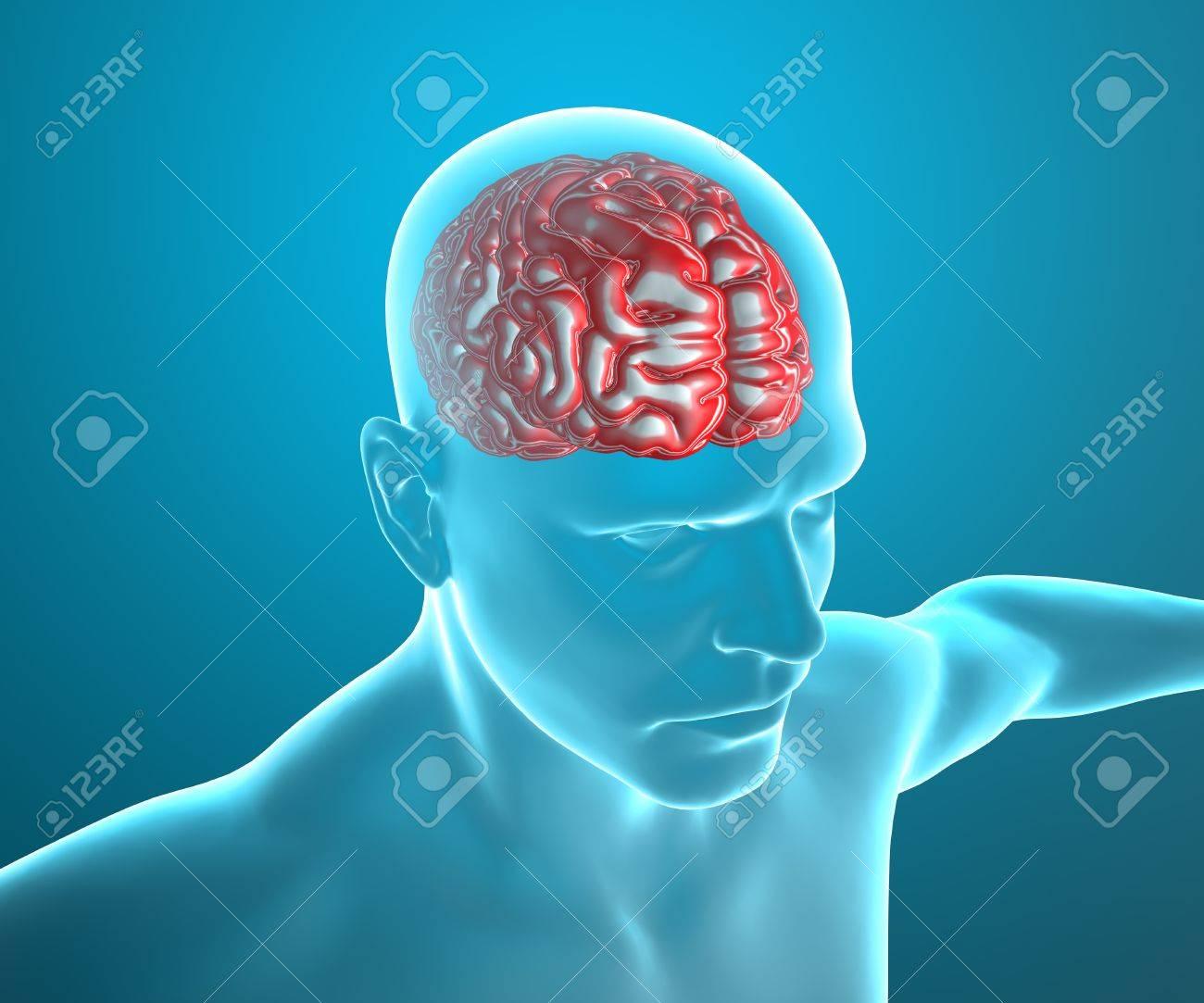 Gehirn Anatomie Des Menschlichen Körpers Auf Dem Röntgen Lizenzfreie ...