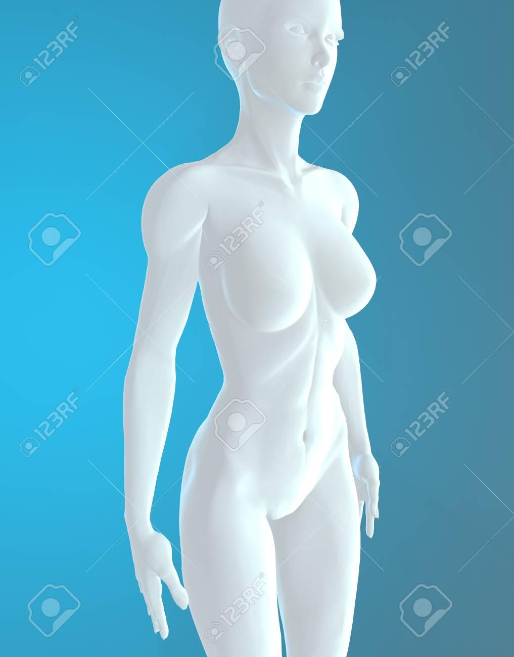 Weibliche Anatomie Menschlicher Körper Weiß Lizenzfreie Fotos ...