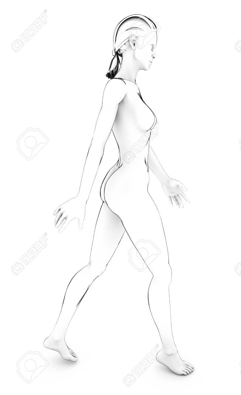 Cuerpo De La Mujer Anatomía Del Cuerpo Humano Boceto Dibujo En ...
