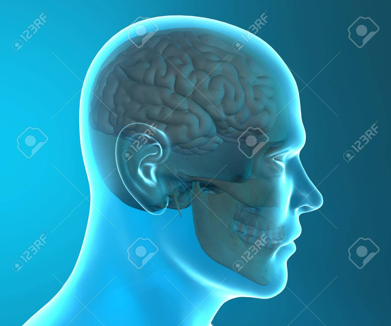 Brain Skull X-ray Head Anatomy Stock Photo, Picture And Royalty Free ...