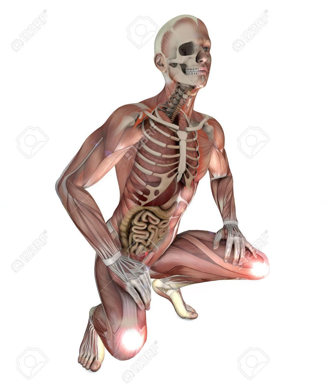 Großartig Muskel Skelett Anatomie Malbuch Bilder - Malvorlagen Von ...