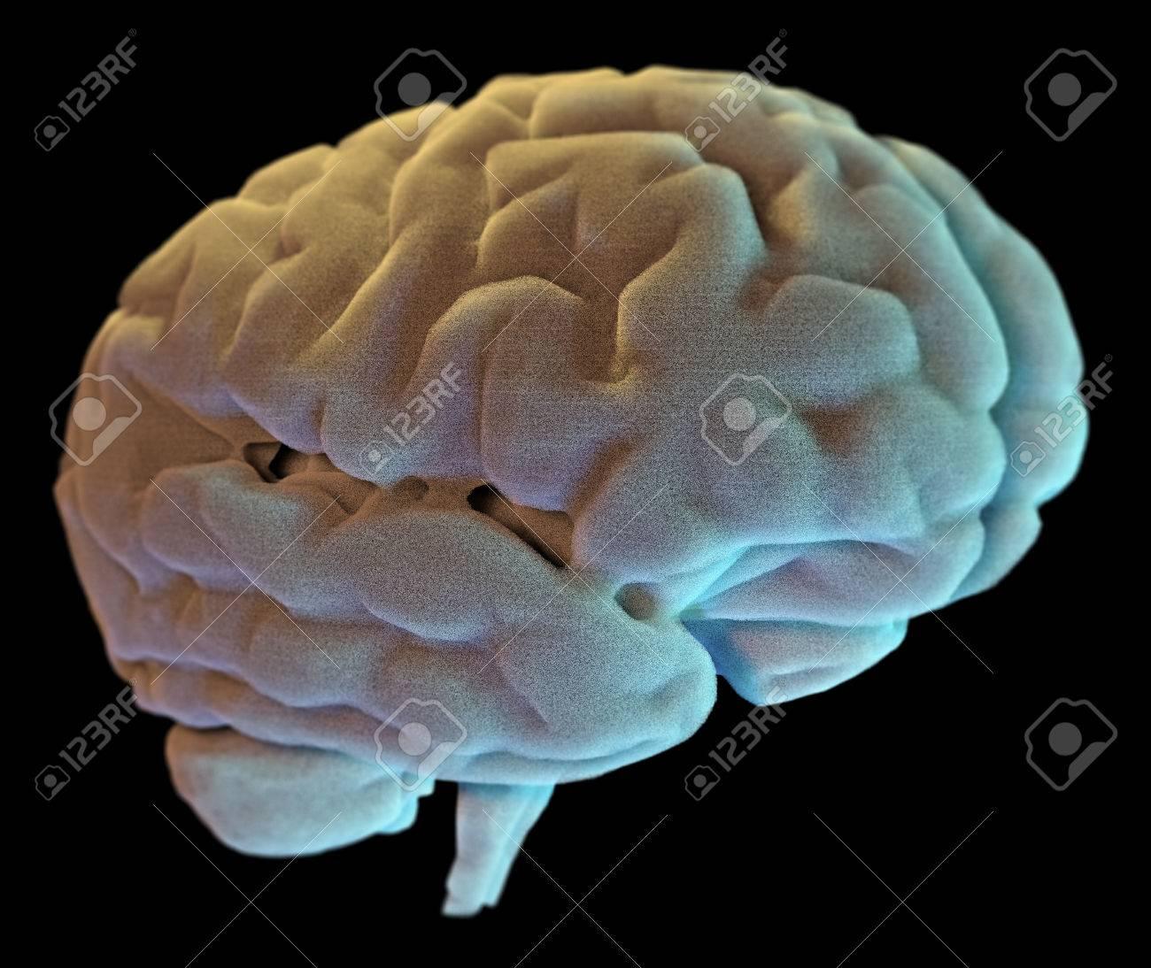 Gehirnneuronen Synapse, Anatomie Körper, Studium, Krankheit ...