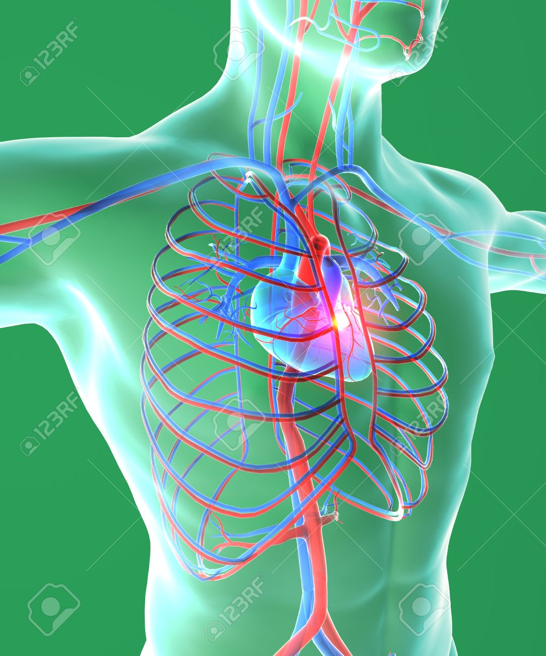 Heart And Chest, Surgery, Human Body, Circulatory System, Man ...