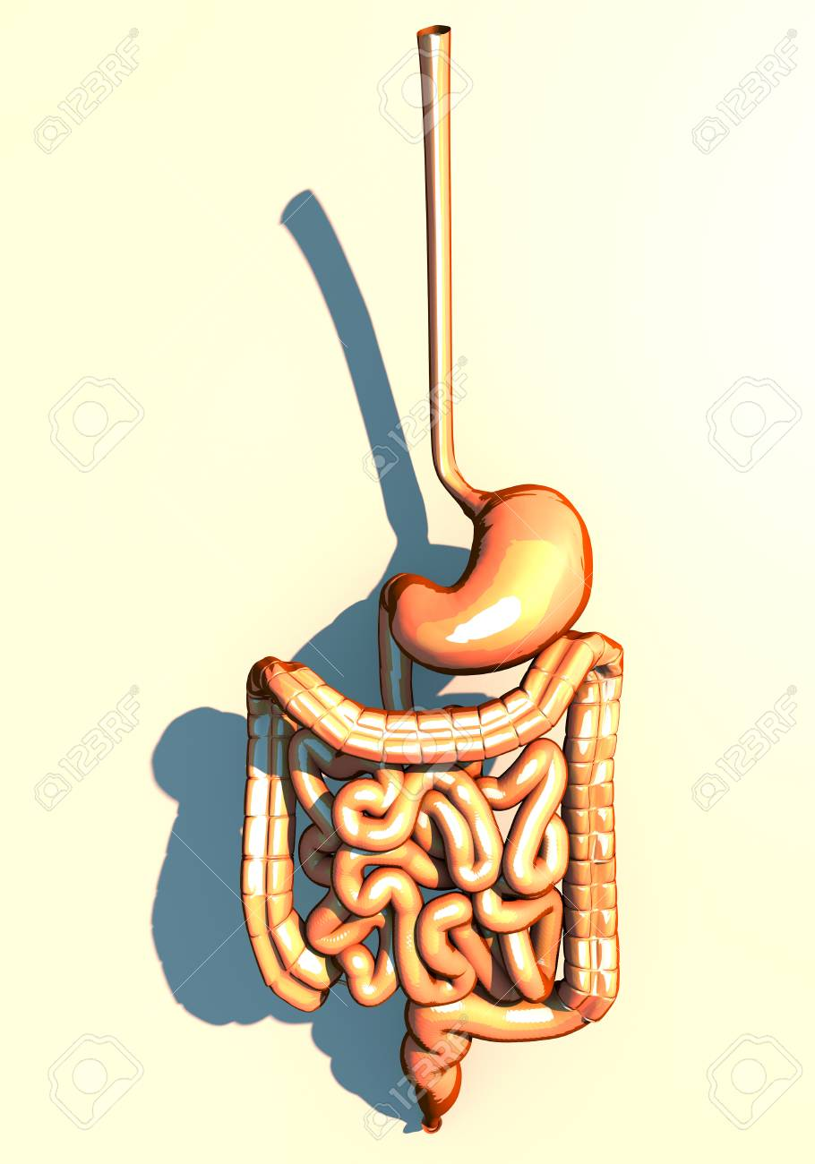 Darm, Verdauungssystem, Magen, Speiseröhre, Zwölffingerdarm ...