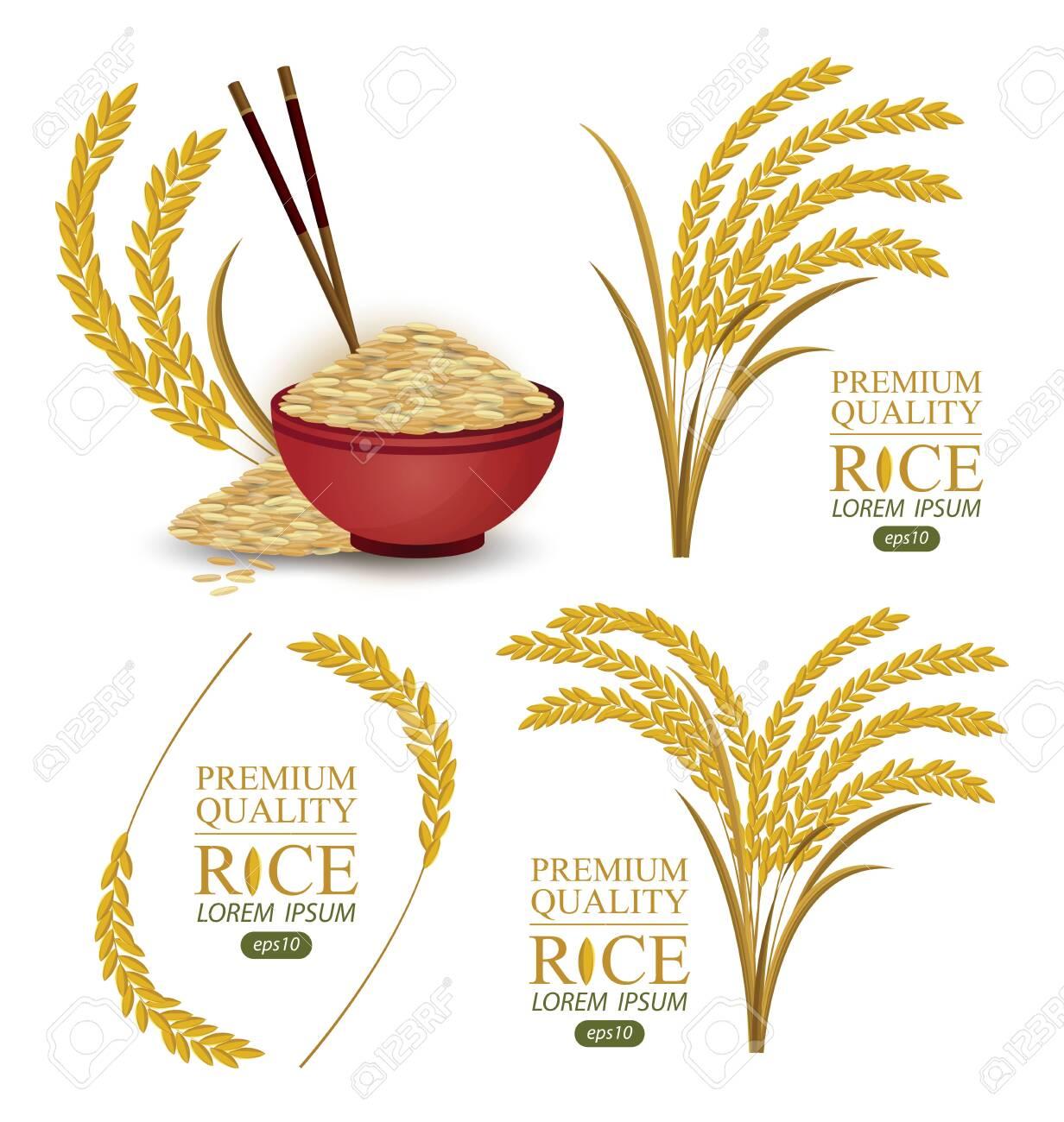 Rice. Vector illustration. - 137138937