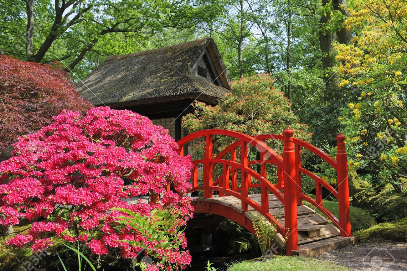 japanese garden with flowers and red bridge stock photo, picture and