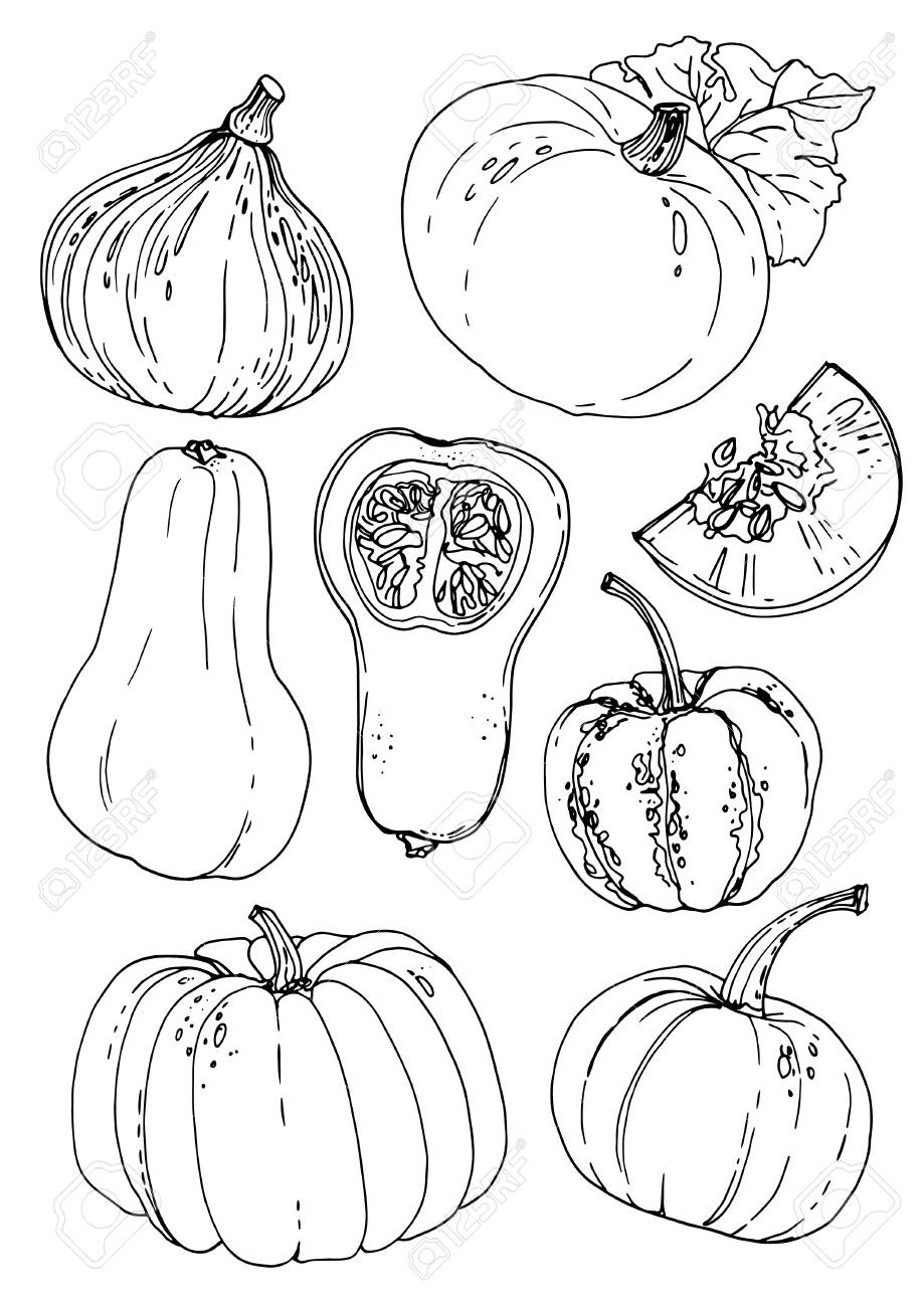 Pumpkins line drawn on a white background - 102050706