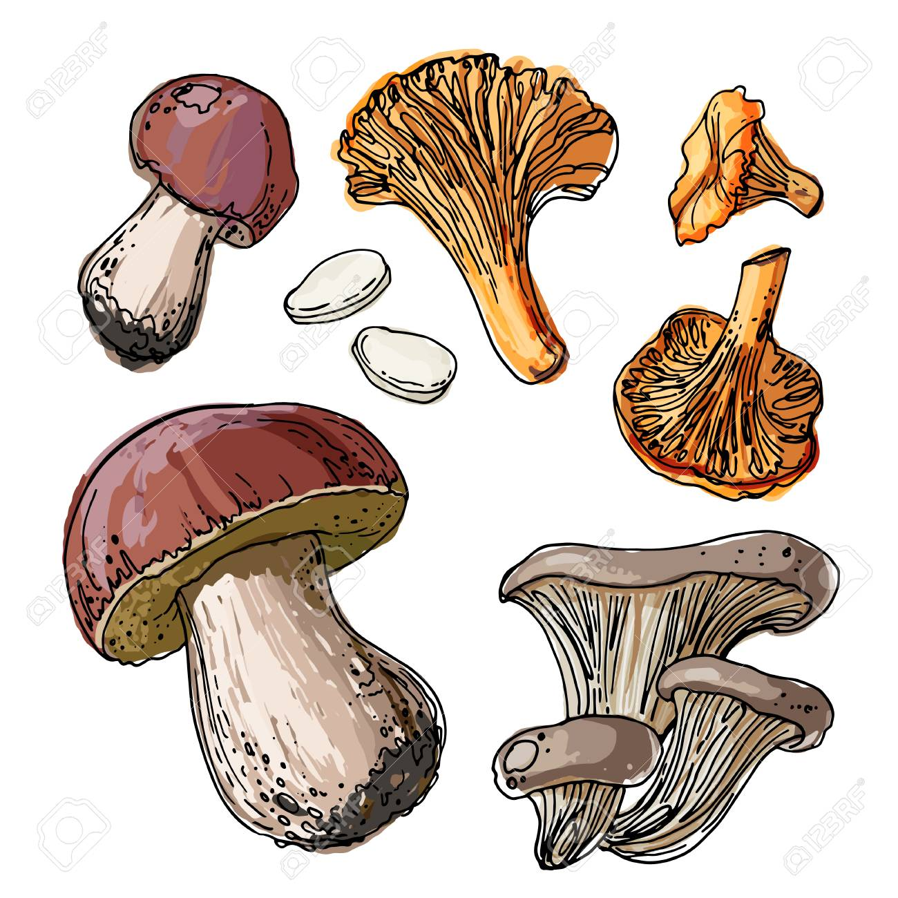 Set Of Edible Mushrooms A Sketch Of Food Drawn By A Black Line