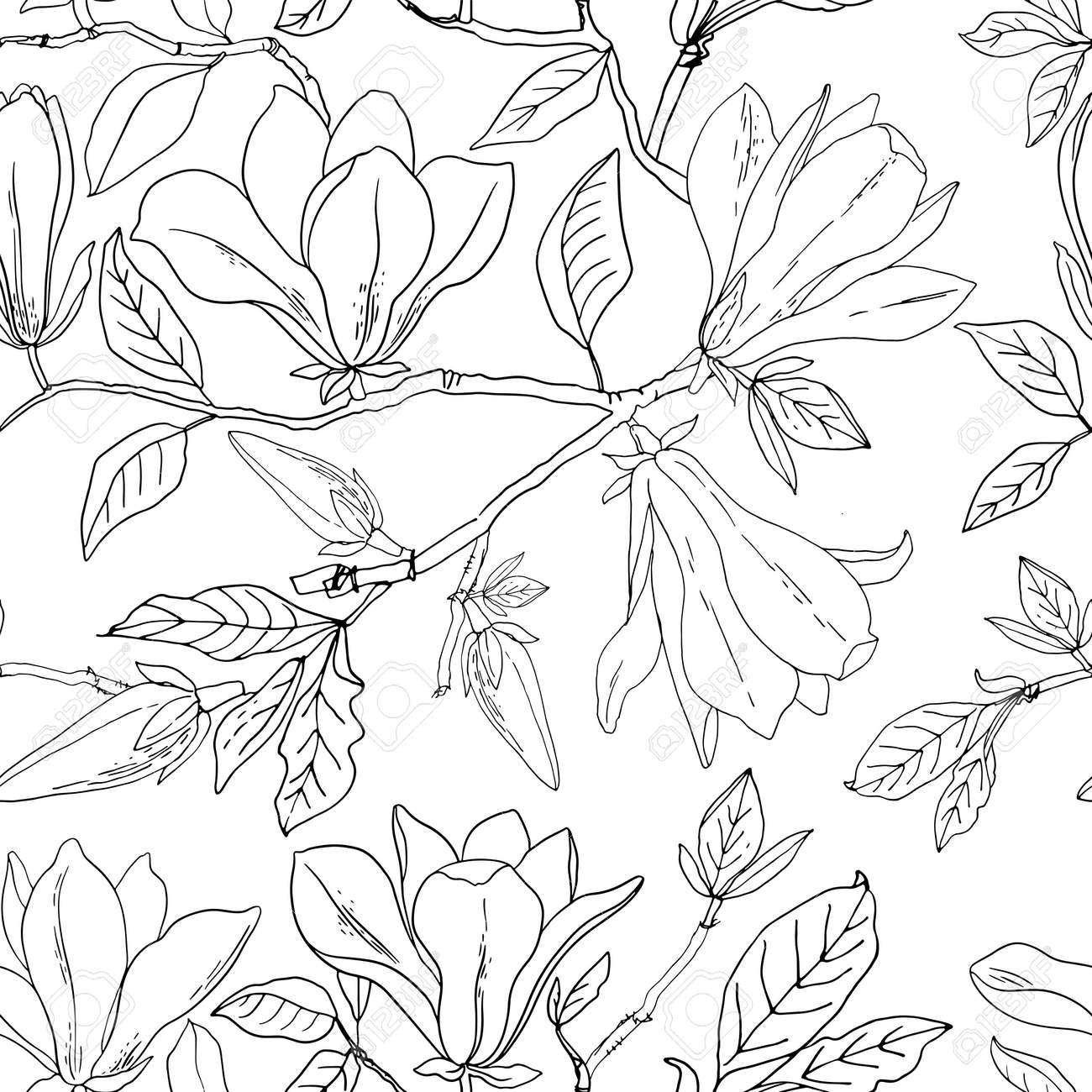 Flower pattern Magnolia. Vector sketch of flowers by line on a white background. - 169914263