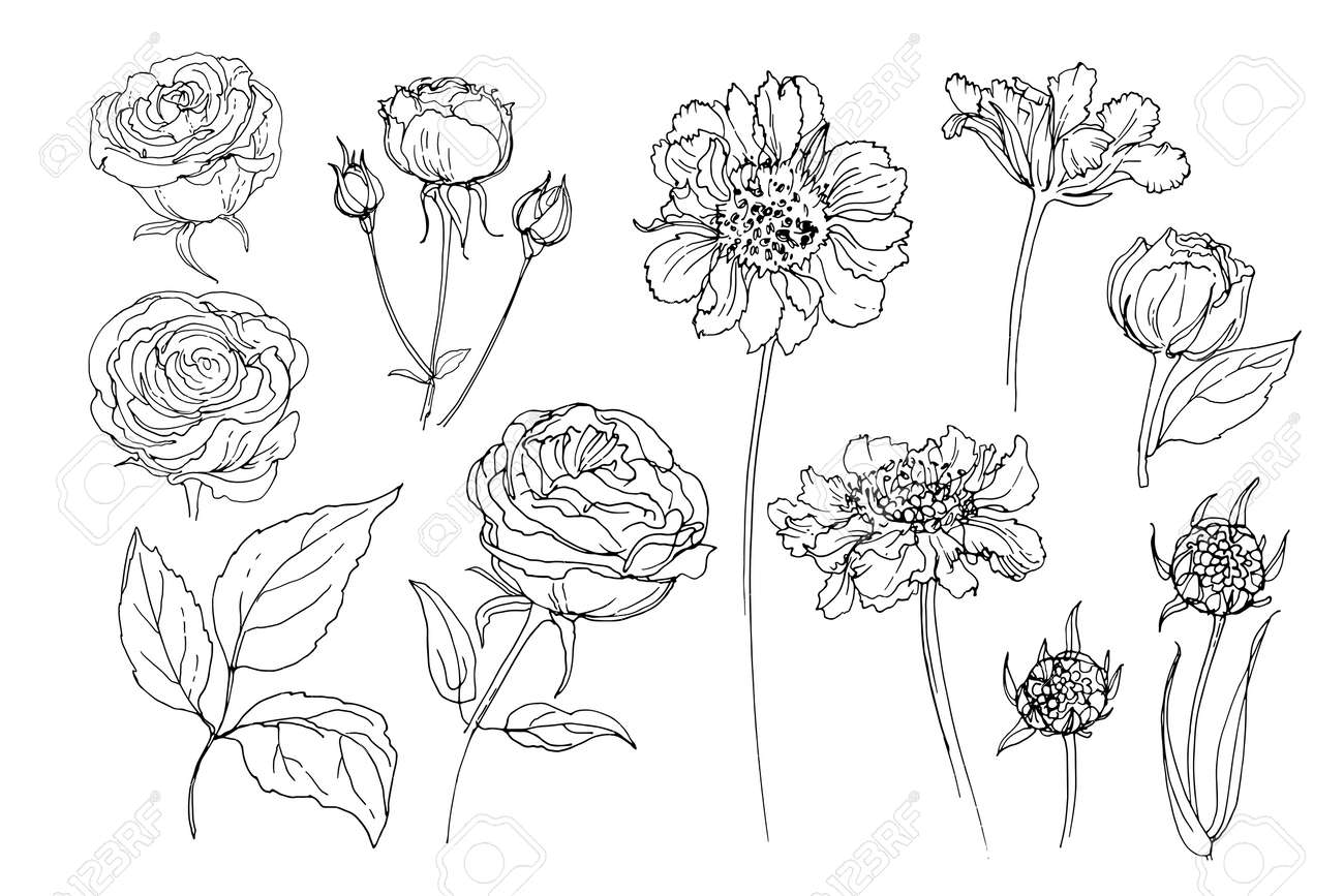 Flowers line drawn on a white background. Vector sketch of flowers. Roses - 169914272
