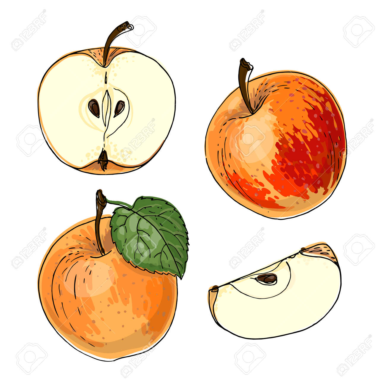 Apple red and orange. Vector food icons of fruits. Colored sketch of food products. - 170893631