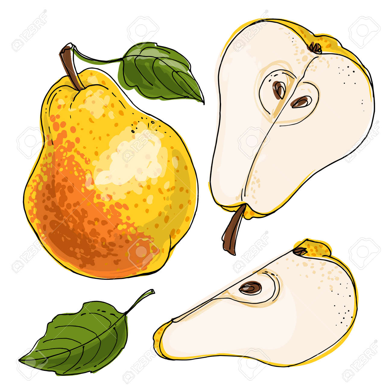 Pear Vector food icons of fruits. Colored sketch of food products. Red bartlett - 170860688