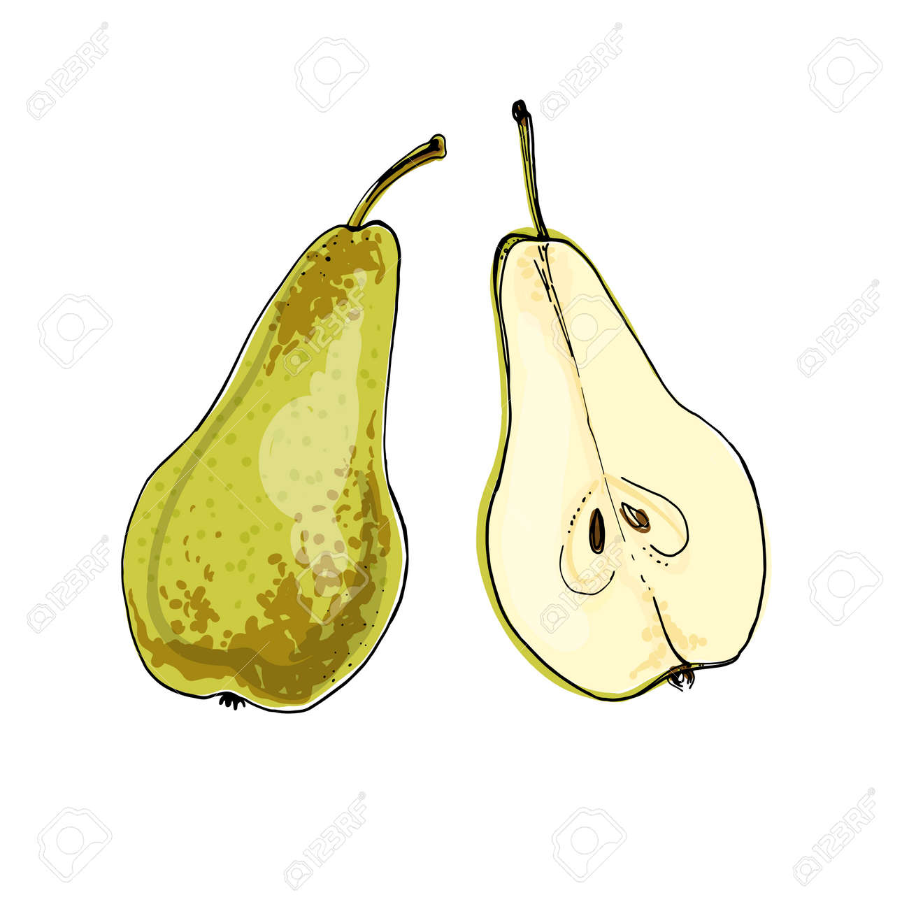 Pear Vector food icons of fruits. Colored sketch of food products. Pear Conference - 170860694