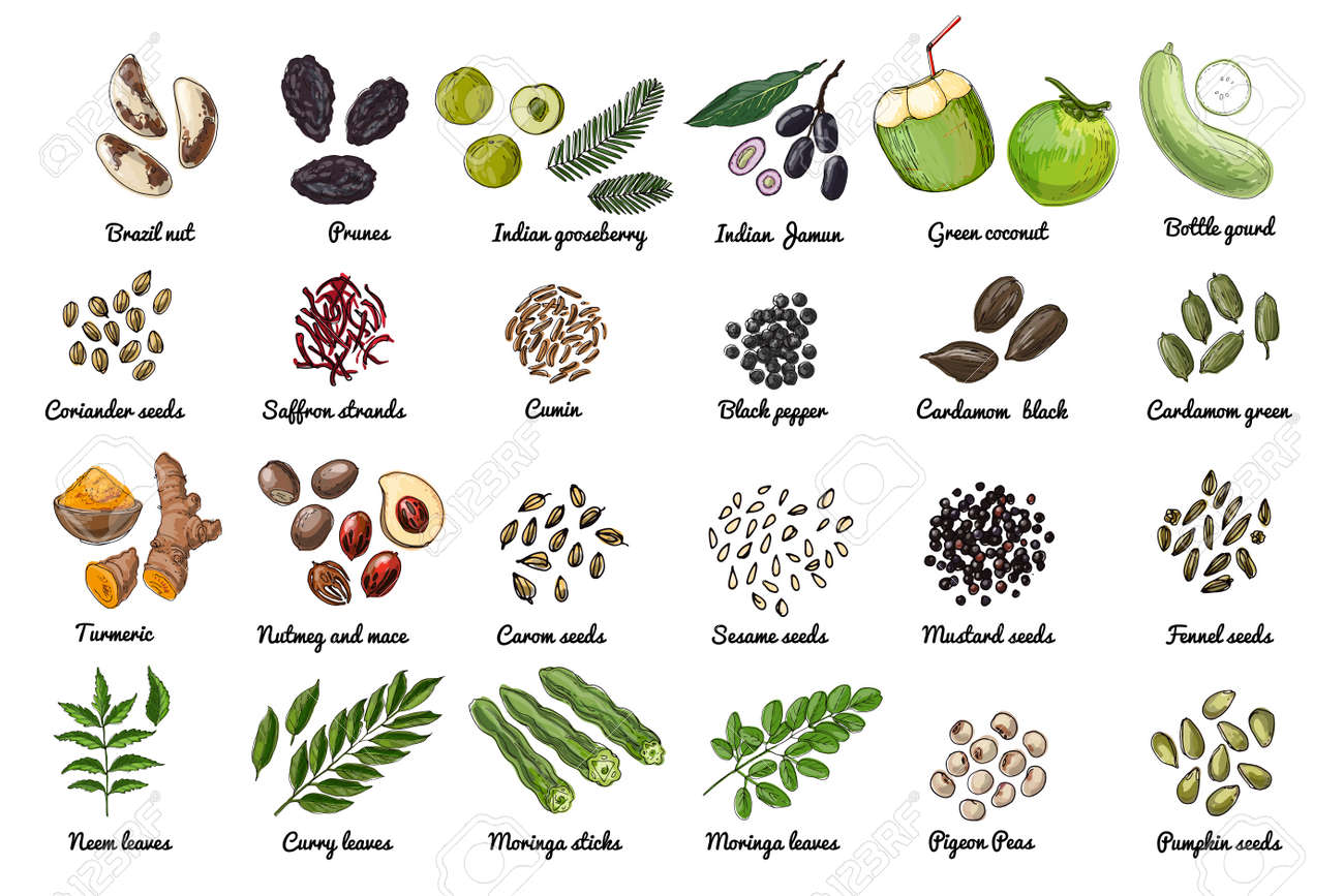 Vector food icons. Colored sketch of food products. Spices, nuts, herbs, beans, cereals. - 171951911