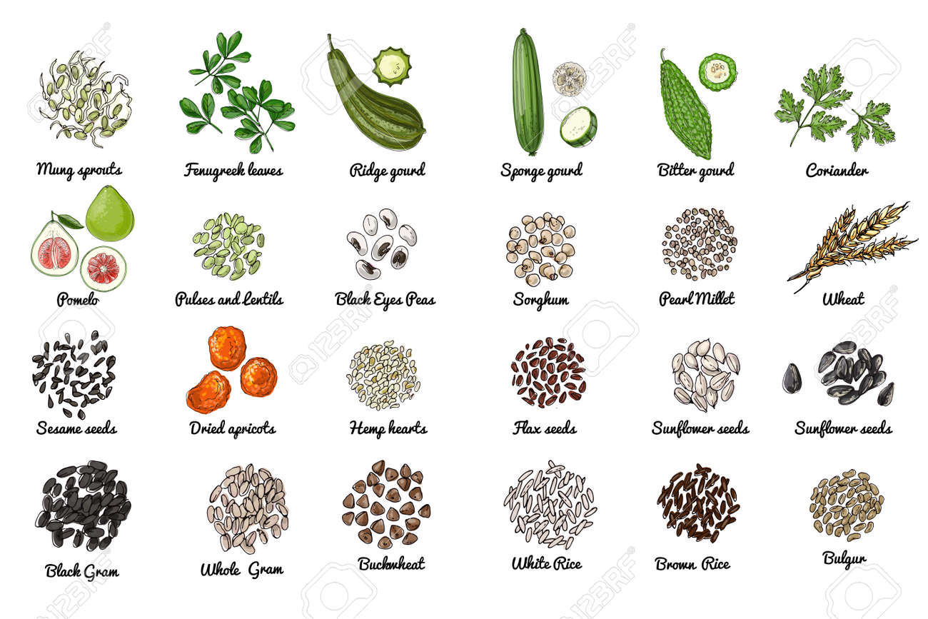 Vector food icons. Colored sketch of food products. Spices, nuts, herbs, beans, cereals. - 171951914