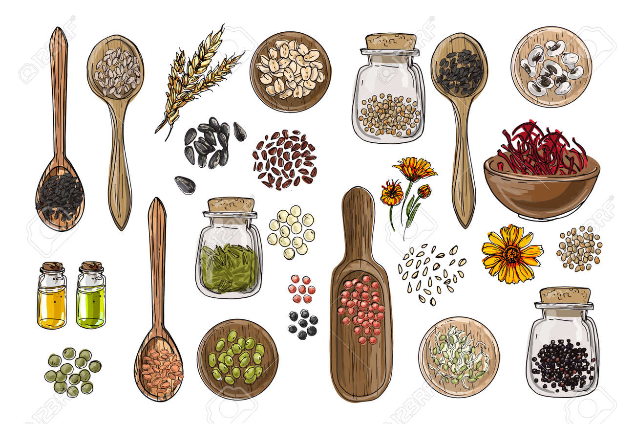 Vector food icons. Colored sketch of food products. Spices, nuts, herbs, beans, cereals, oil, spice jars, wooden spoons. - 171951921