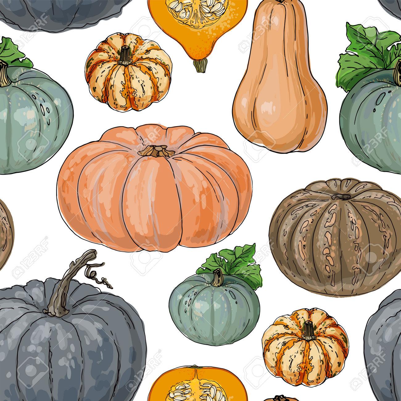 Seamless pattern vector vegetable food. Orange And Gray Pumpkin. autumn ornament - 173006175