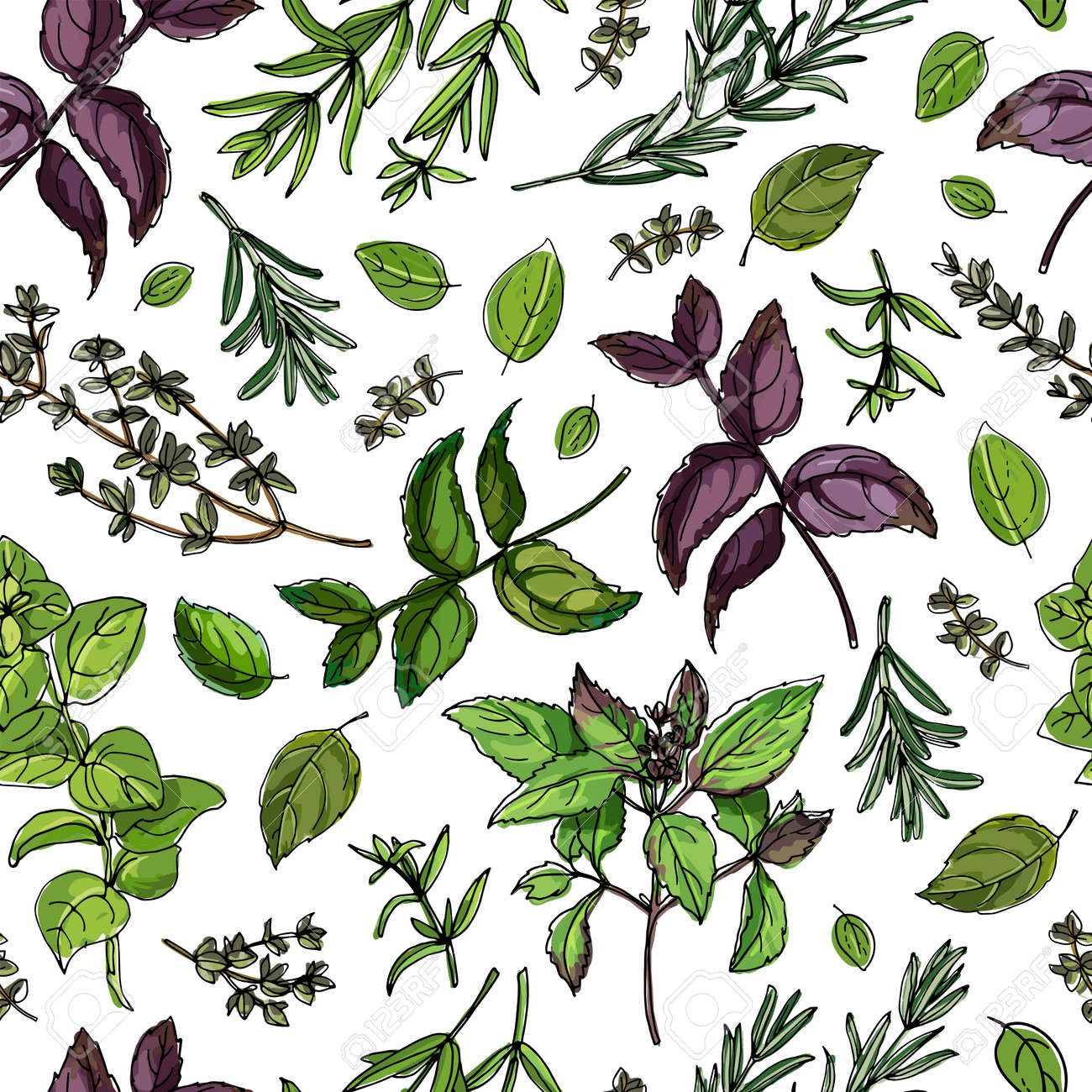 Seamless pattern vector color food. Basil, Parsley, Rosemary, Sage, Bay, Thyme, Oregano, Mint - 173006301