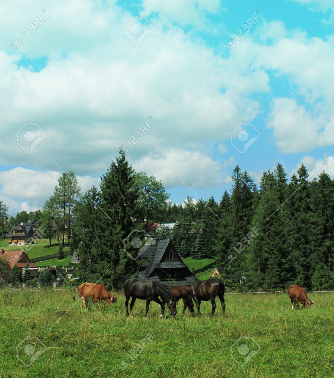Herd of horses and cow grazing on an autumn meadow Stock Photo - 17224863