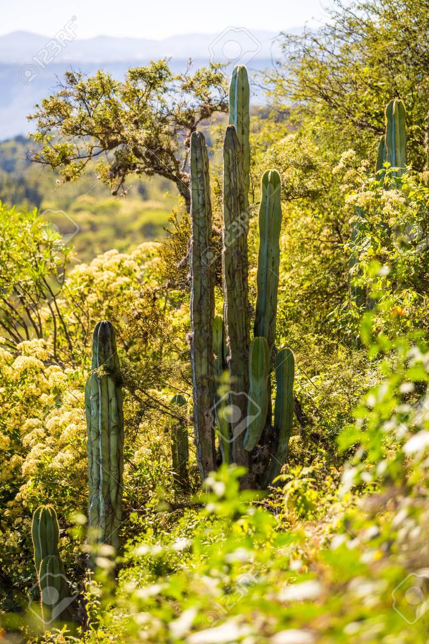 Desierto Seco A La Luz Del Dia Con Cactus Insummer Fotos Retratos - Cactus-seco