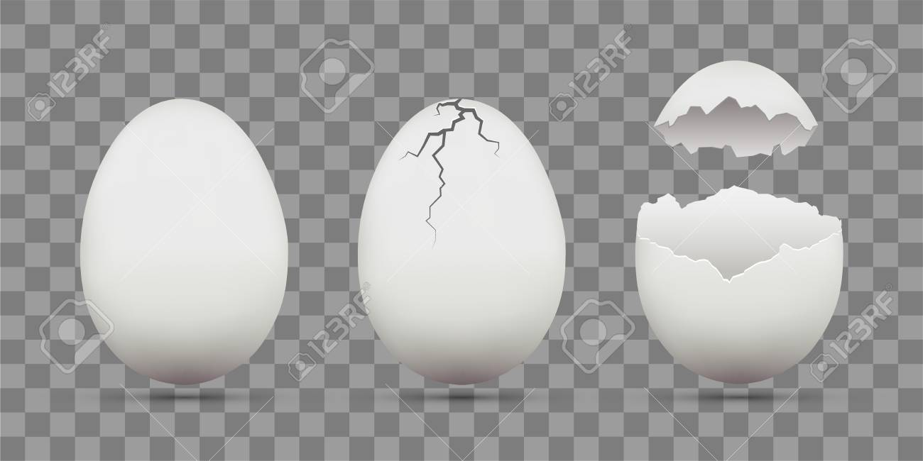 Set of white chicken eggs. Shell with cracks. Isolated on a transparent background. Stock vector template. - 108305906
