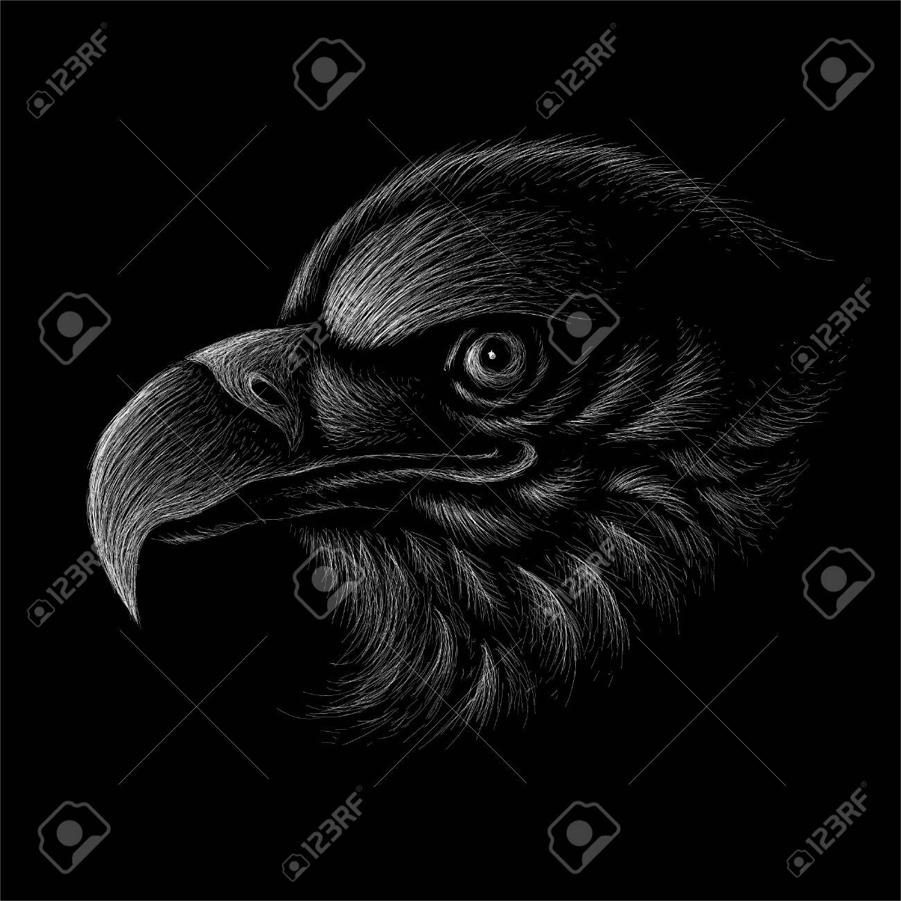 The Vector Eagle For Tattoo Or T Shirt Design Or Outwear Hunting Royalty Free Cliparts Vectors And Stock Illustration Image 147263689