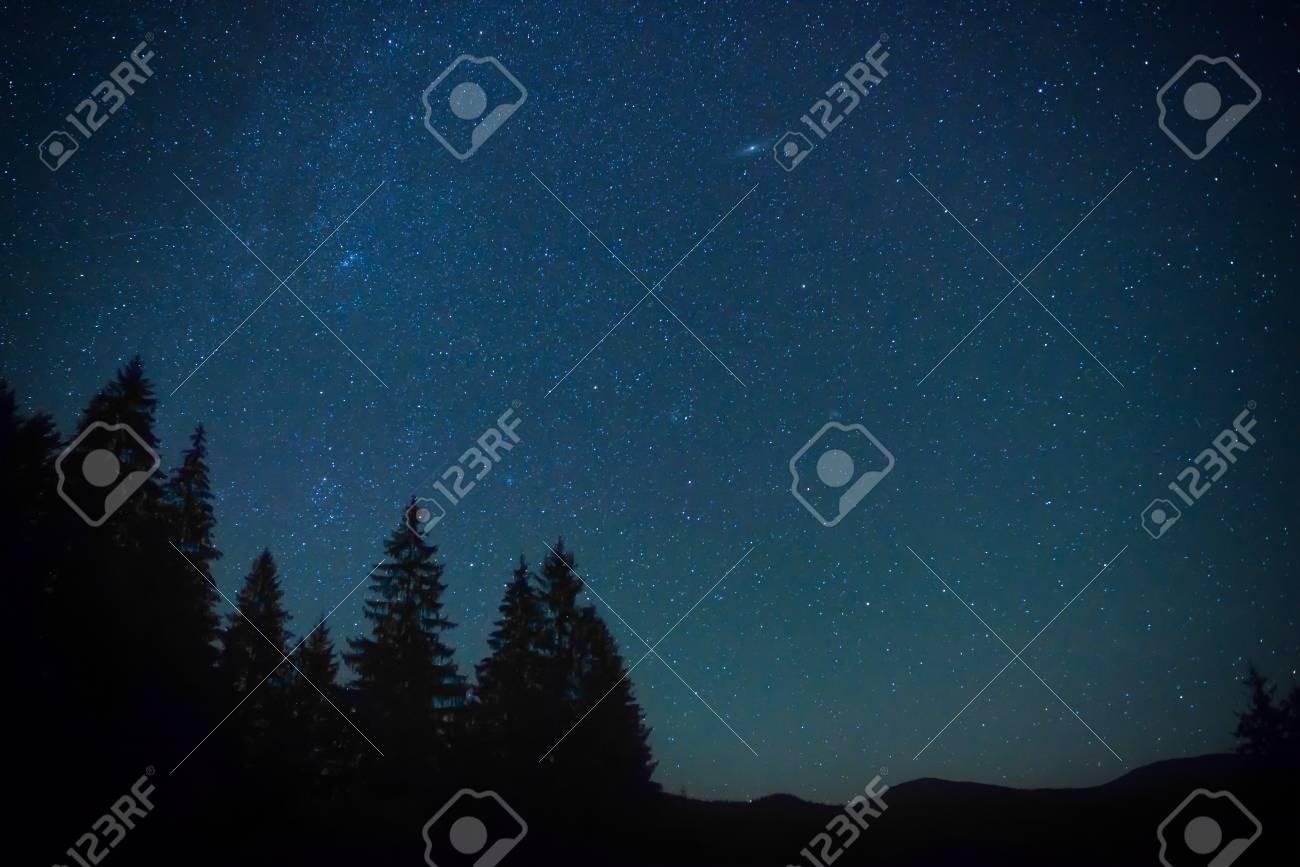 unique design official photos various colors Ciel bleu nuit au-dessus de la forêt de mystère avec des pins
