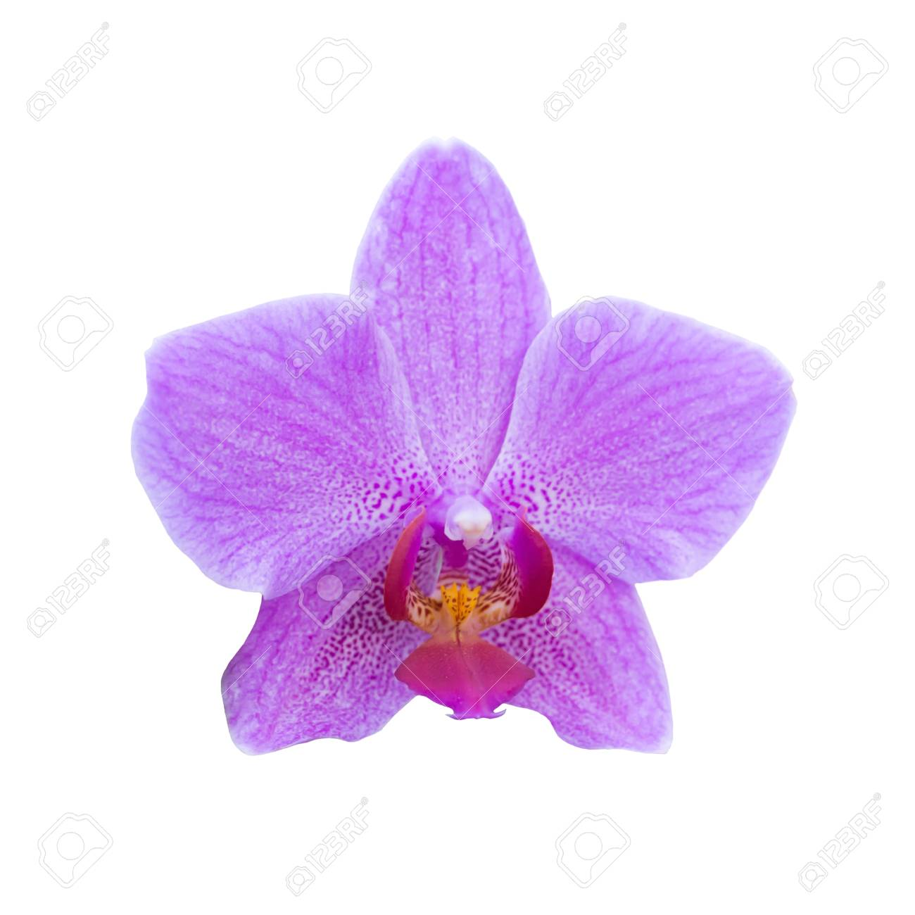 Purple Orchids In A Wild Tropical Forest Beautiful Spring Flowers
