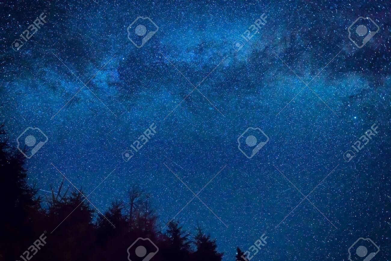 Forest and pine trees landscape under blue dark night sky with many stars, milky way cosmos background - 158173555