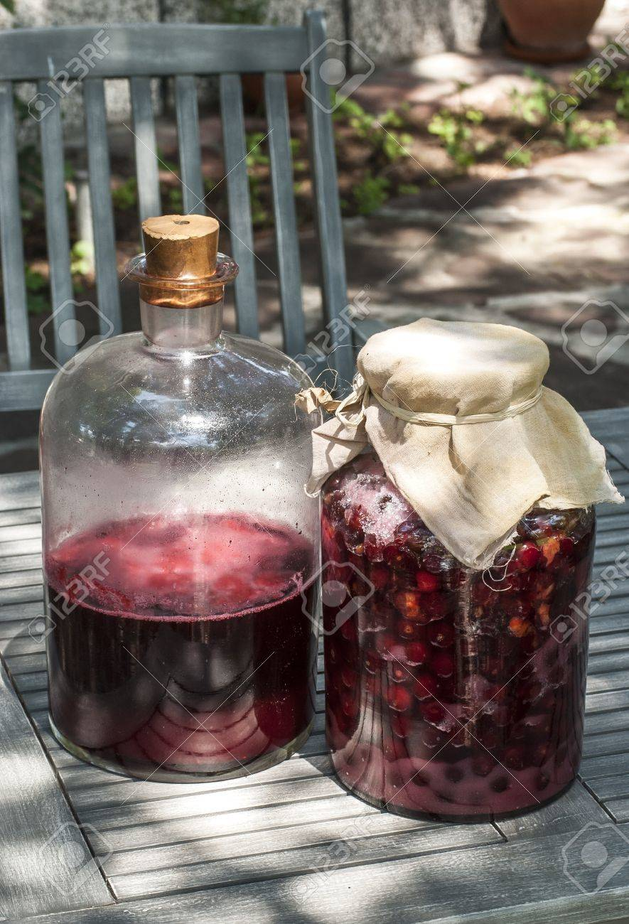 large glass jars with sugar soaked sour cherries and alcohol for making homemade liqueur stock - Large Glass Jars
