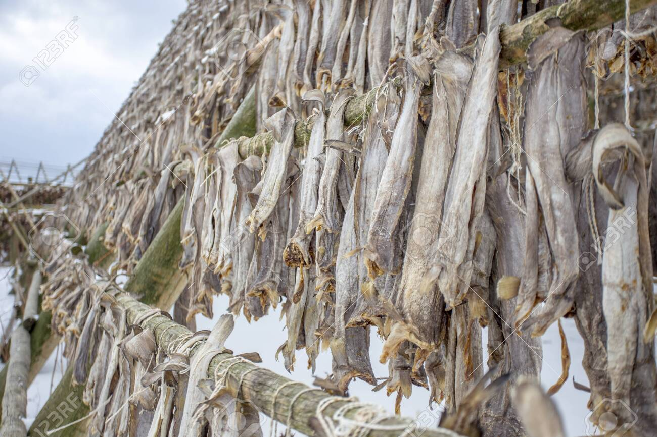 The fish is dried on special stands in the old Norwegian traditions,