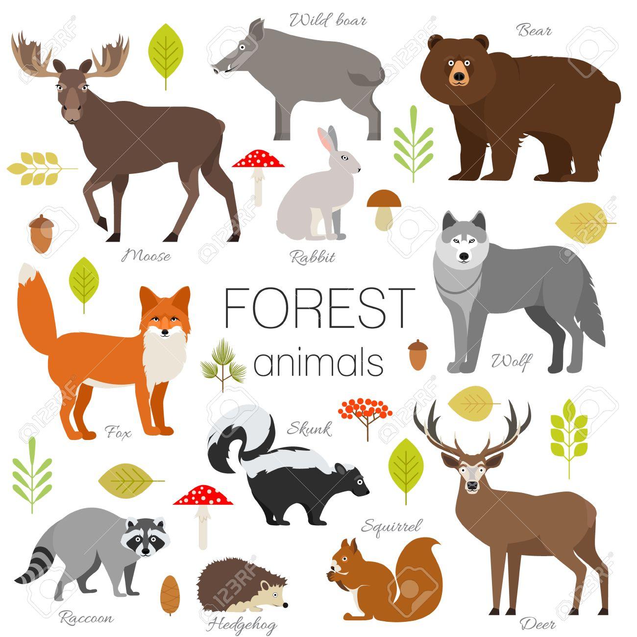 Set of forest animals isolated vector. Moose, wild boar, bear, fox, rabbit, wolf skunk raccoon deer squirrel hendgehog - 68501203